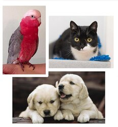 Image for Pets Birds Animals - One-day Workshop
