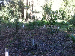 Image for Volunteer with Pioneer Catchment & Landcare Group Inc.