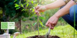 Image for Community Tree Planting Workshop ~ Nana Glen