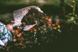 Image for *Postponed* Tool Maintenance & Sharpening for Gardeners