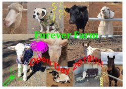 Image for Furever Farm Open Day