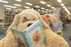Image for Saturday Storytime at Toormina Library