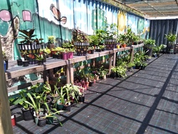 Image for Plant Sales and Market Stall