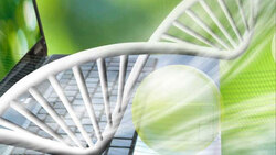 Image for Make the most of DNA matches - Burpengary Library
