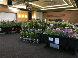 Image for Orchid Show - Spring 2021