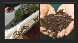Image for Worm Farming and Composting at Home with Brian Donaldson