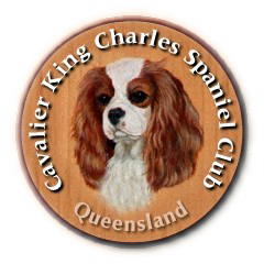 Cavalier King Charles Spaniel Club of Queensland
