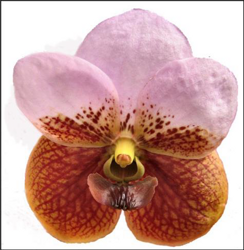 West Brisbane Orchid Society Inc.